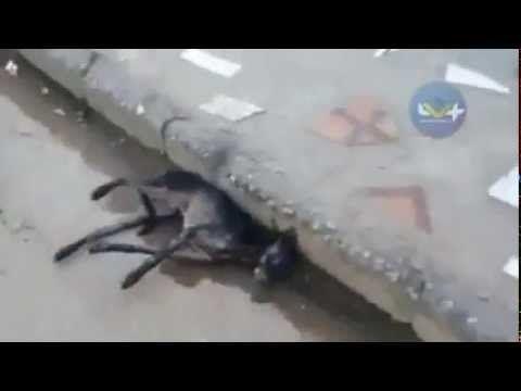 Homem dedica a vida para salvar animais à beira da morte