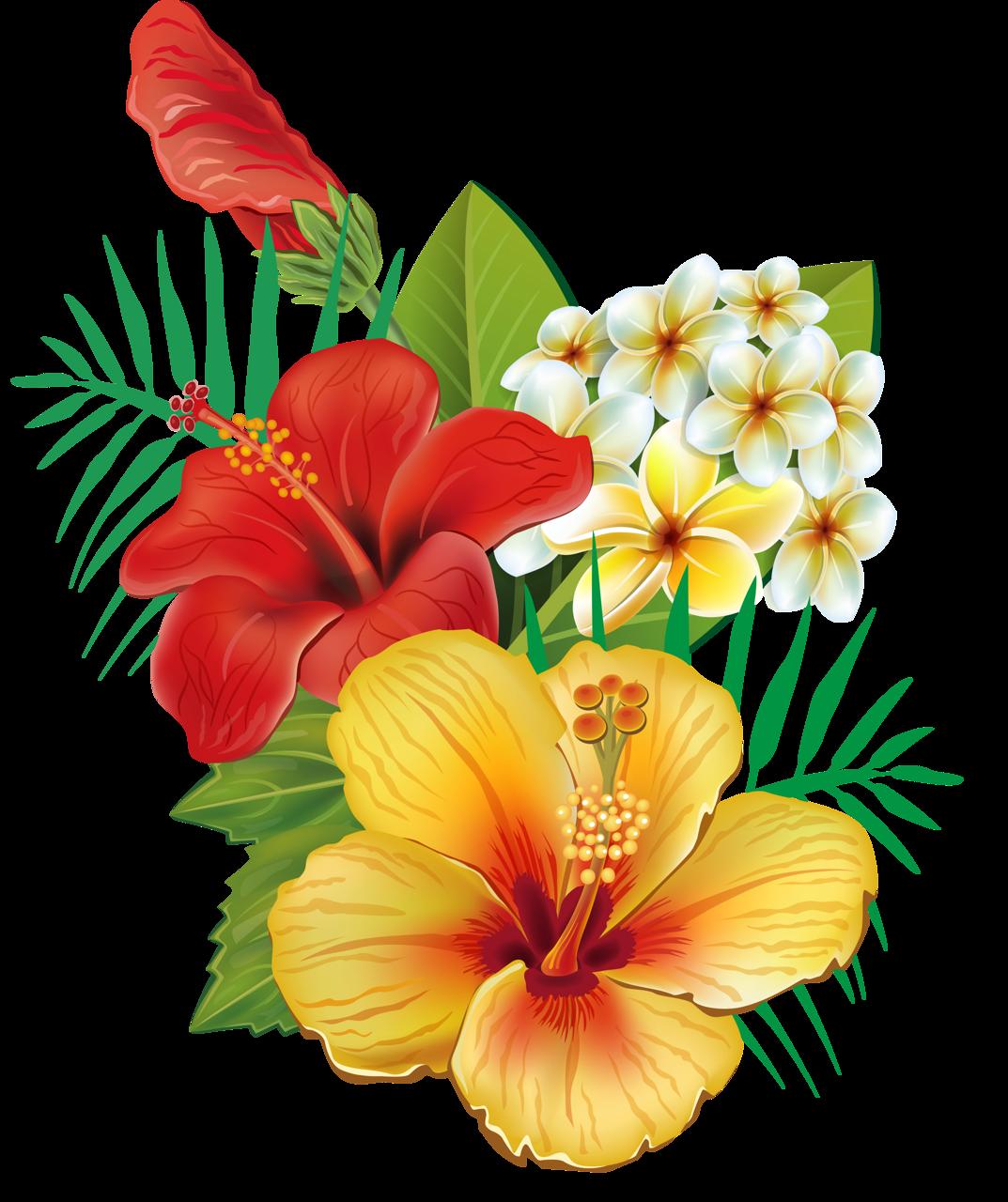 soloveika flores hibisco net soloveika butterfly flowersflower artflower izmirmasajfo Image collections
