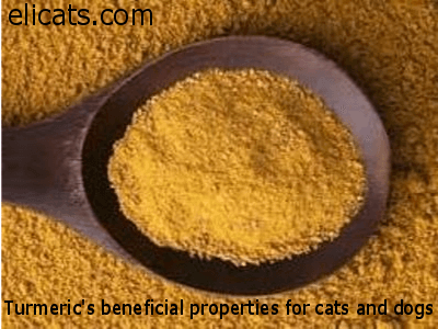 Turmeric's beneficial properties for cats and dogs via @elicats