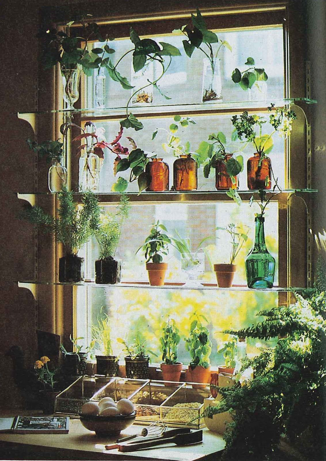 Kitchen window for plants - Kitchen Window Idea