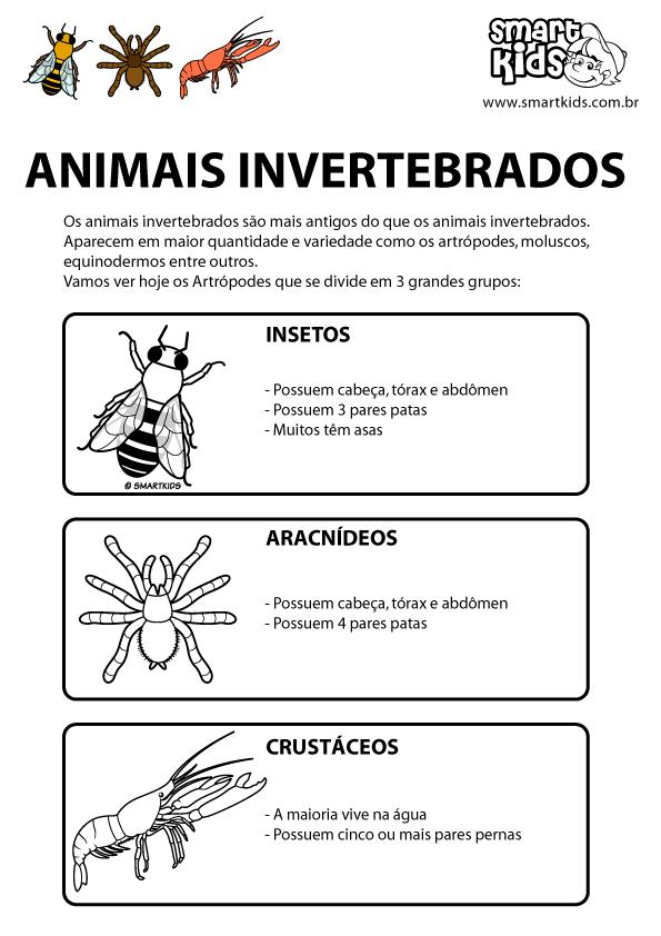 Colorir Desenho Animais Invertebrados Animais Vertebrados E