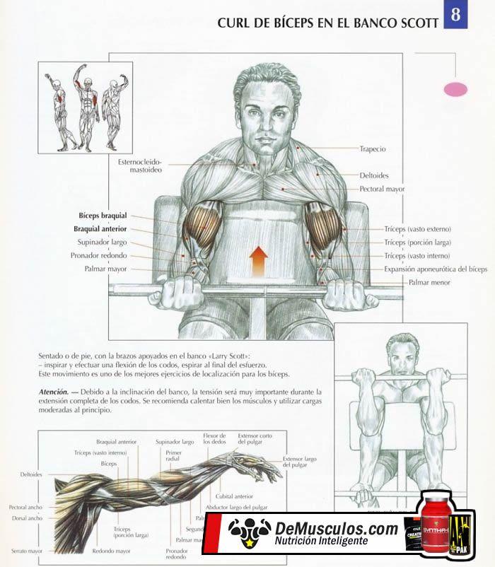 Curl biceps banco scott mancuernas
