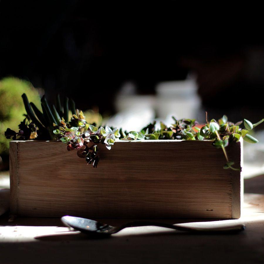 Terrarios En Caja De Madera De Suculentas Decorative Tray Sweet Home Decor