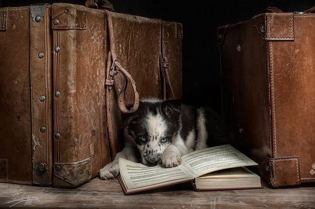 Devorador de libros | Photographer: Javier Senosiain of Silversaltphoto