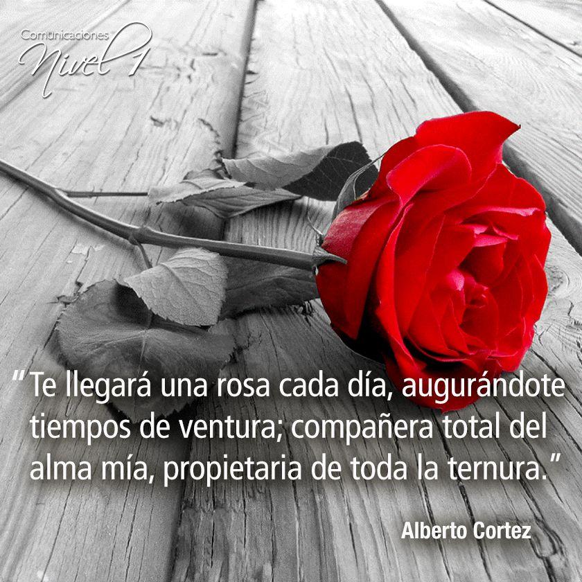 """Alberto Cortez, es conocido por muchos como """"El gran cantautor de las cosas simples"""". Algunas de sus canciones más conocidas son: En un rincón del alma, Cuando un amigo se va, Callejero, Mi árbol y yo, A partir de mañana, Te llegará una rosa, Castillos en el aire, El abuelo."""