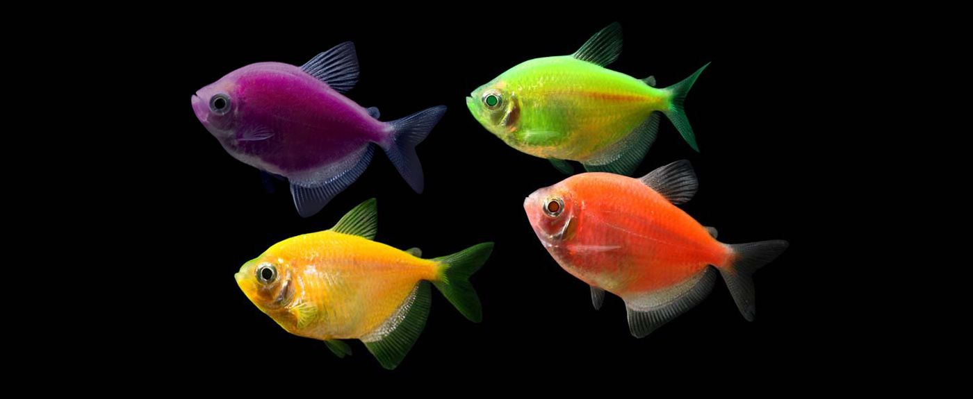 Freshwater aquarium fish neon - 1000 Images About Glow Fish And Tank Ideas On Pinterest Fish Reel Combo