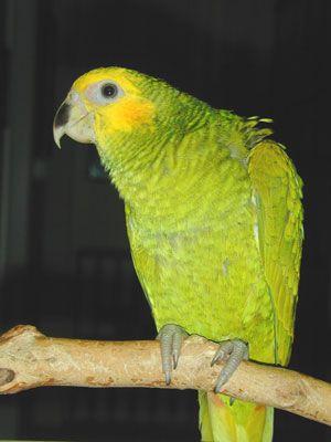 aves international