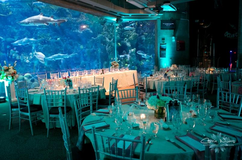 Unique Wedding Ideas Best Aquarium Wedding Venues Aquarium Wedding Aquarium Wedding Reception Unique Weddings