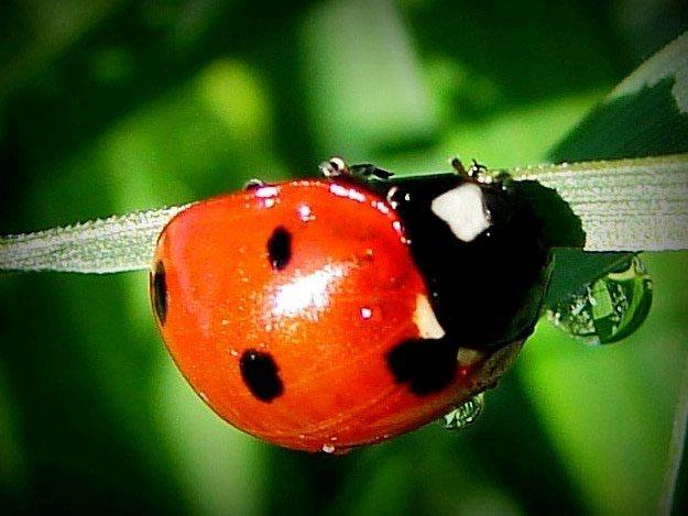 Why Do Ladybugs Have Spots? Ace Exterminators