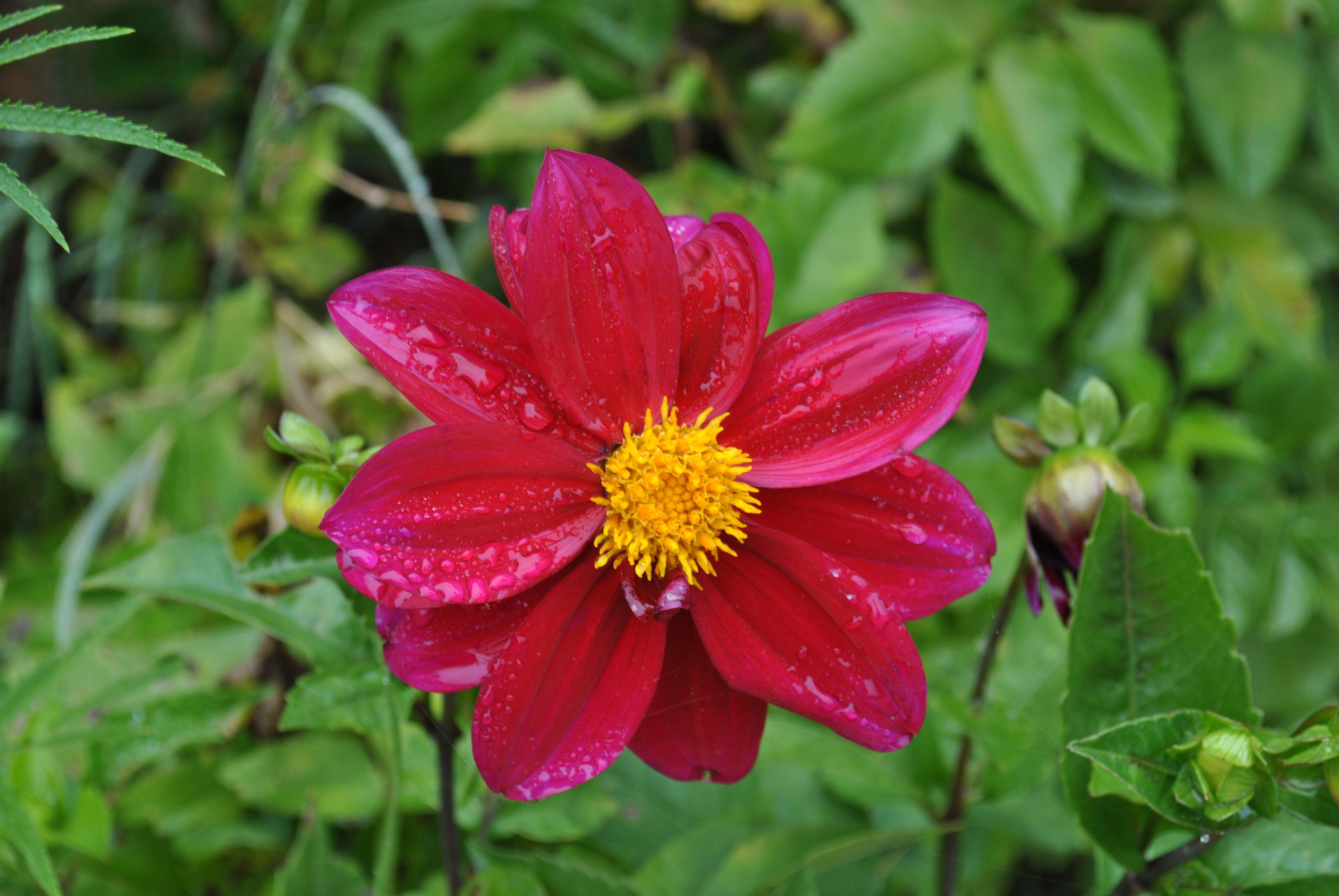 Beautiful flower in La Cumbrecita Flower s Flower Names