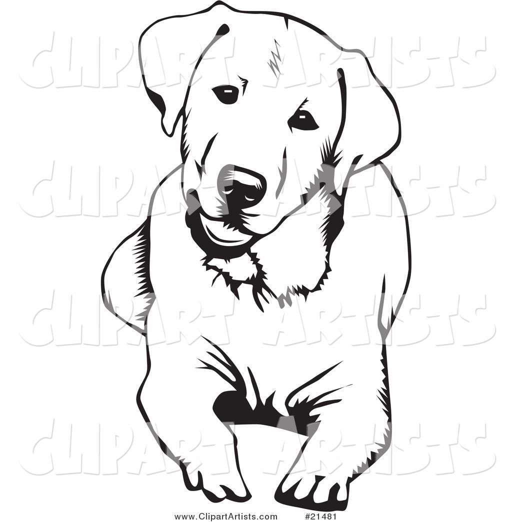 Labrador Coloring Pages