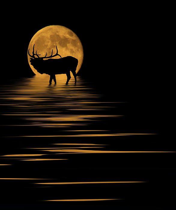 Elk Silhouette, Elk Tattoo, Elk
