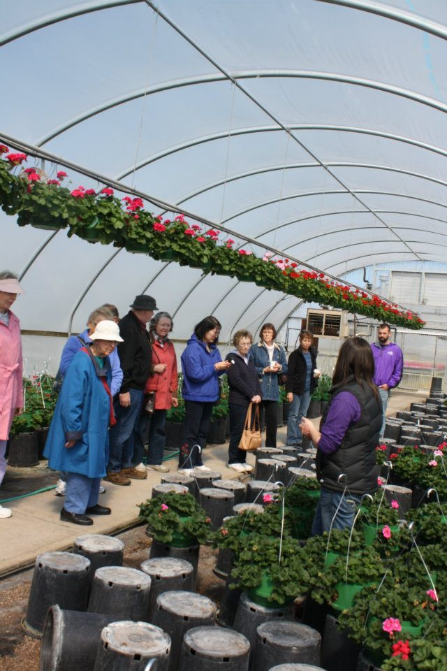 behind the scenes at als garden center we grow 80 of what we sell - Als Garden Center