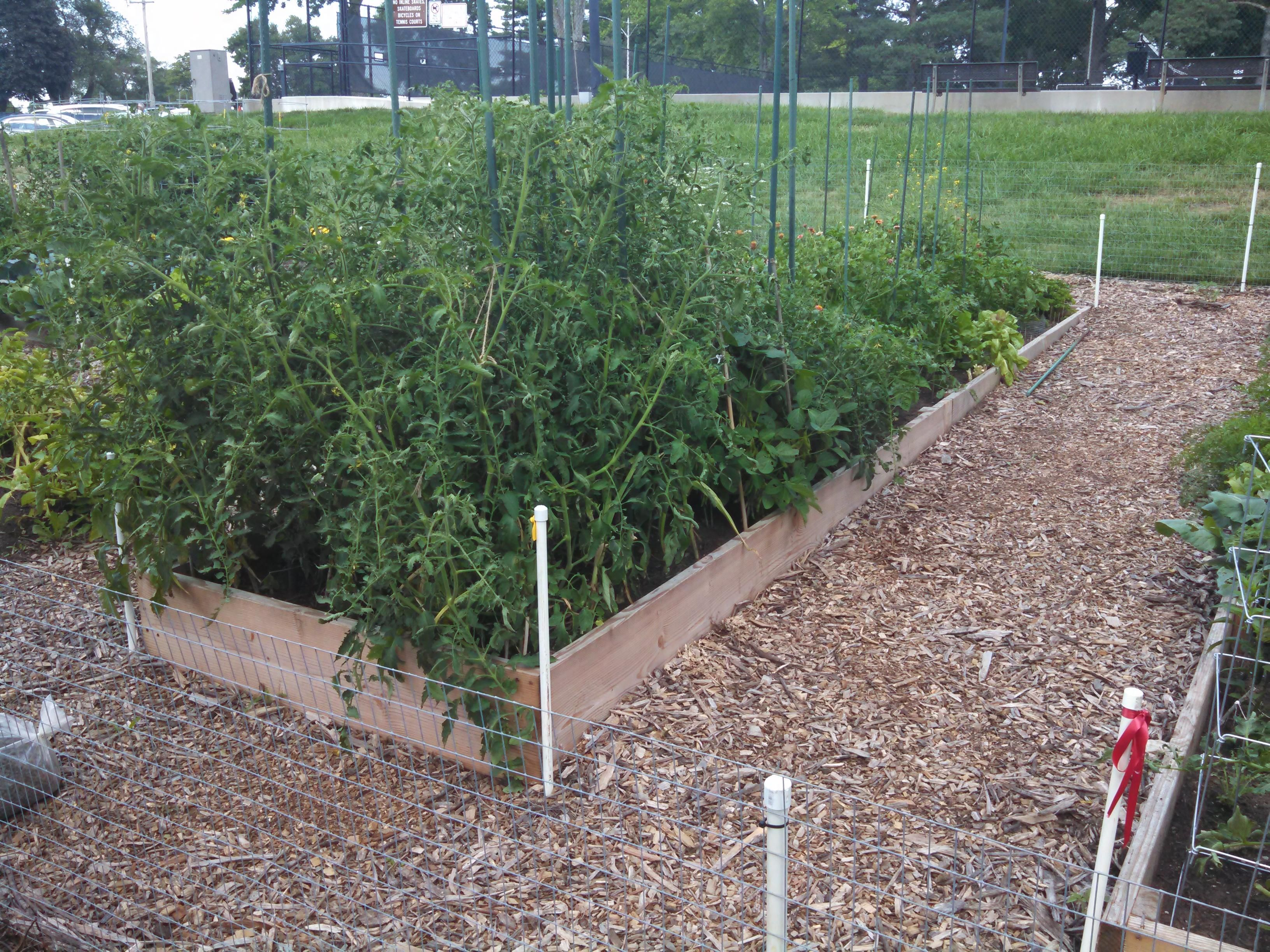 My Garden Plot #gardening #garden #DIY #home #flowers #roses #
