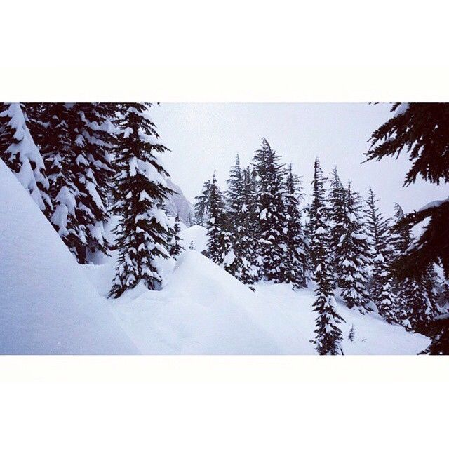 We like our Christmas trees covered in snow / Kirkwood, CA ...