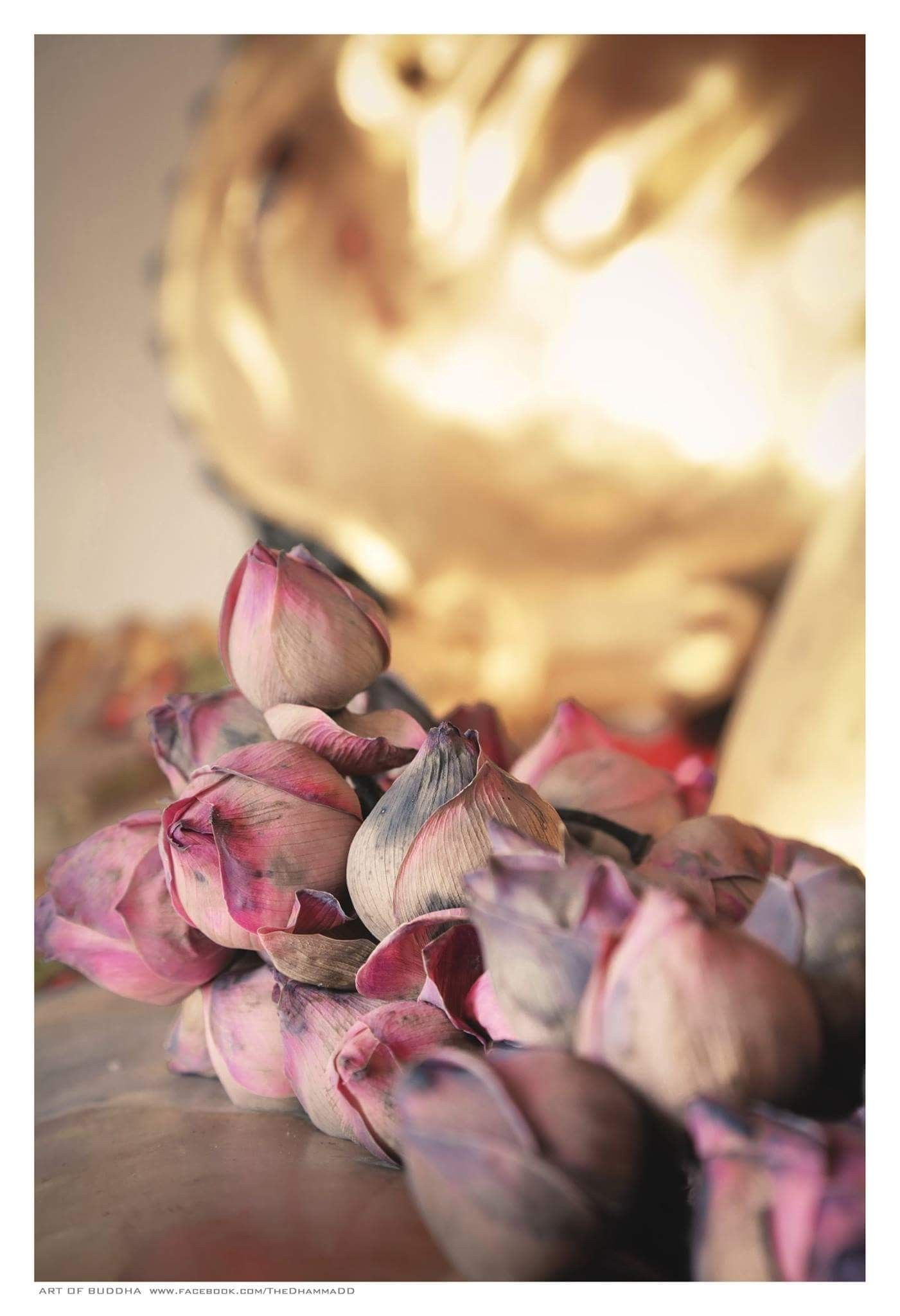 Pin By Wattana Jirasagulthai On The Lotus Flower In Buddhism