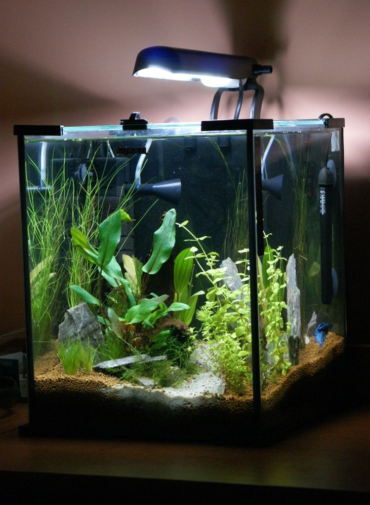 Aquael shrimp set nano fish keeping pinterest betta for Shrimp fish tank