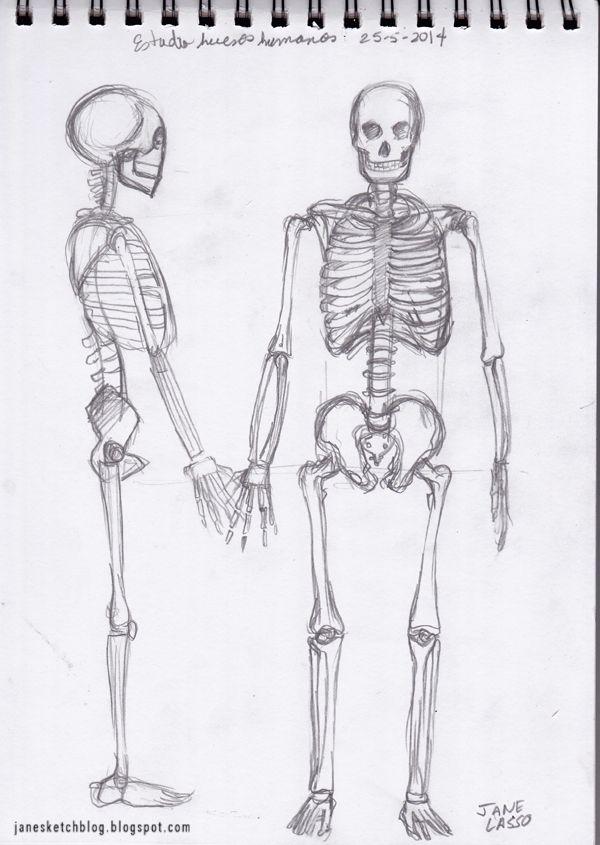 Dibujo de esqueleto humano. Human skeleton study. #anatomy | Dibujo ...