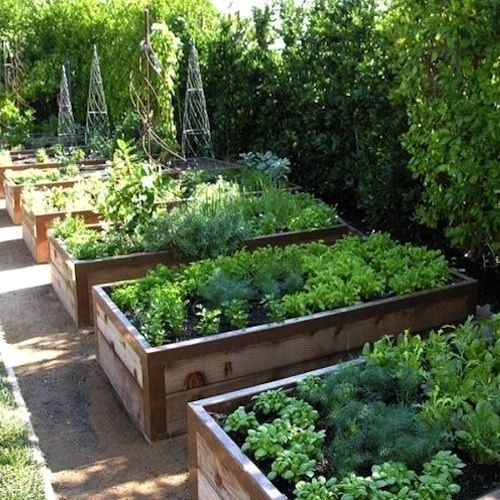 Veggie Patch Layout | Backyard landscaping, Garden bed ...