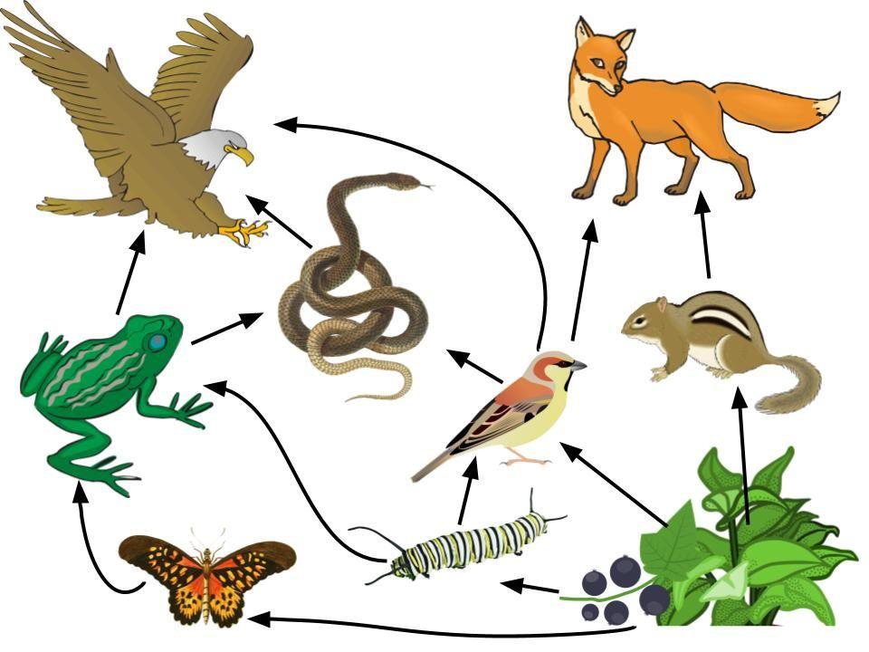 Environmental Systems Clip Art