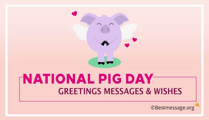 National pig day greetings messages pinterest messages send cool and cute pig day greetings messages for friends family dear ones m4hsunfo