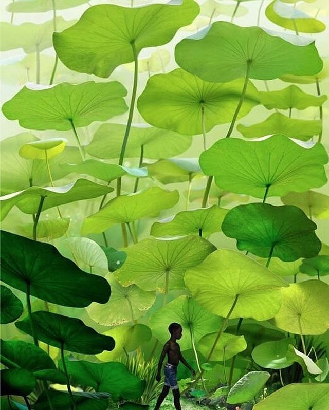 """Horti on Instagram: """"Ruud van Empel is one of the most innovative contemporary artists who is pushing the boundaries of digital photography. Van Empel creates…"""""""