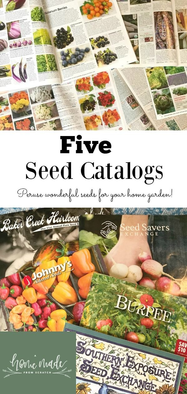 Five Seed Catalogs for 2018 Seed catalogs, Grow your own