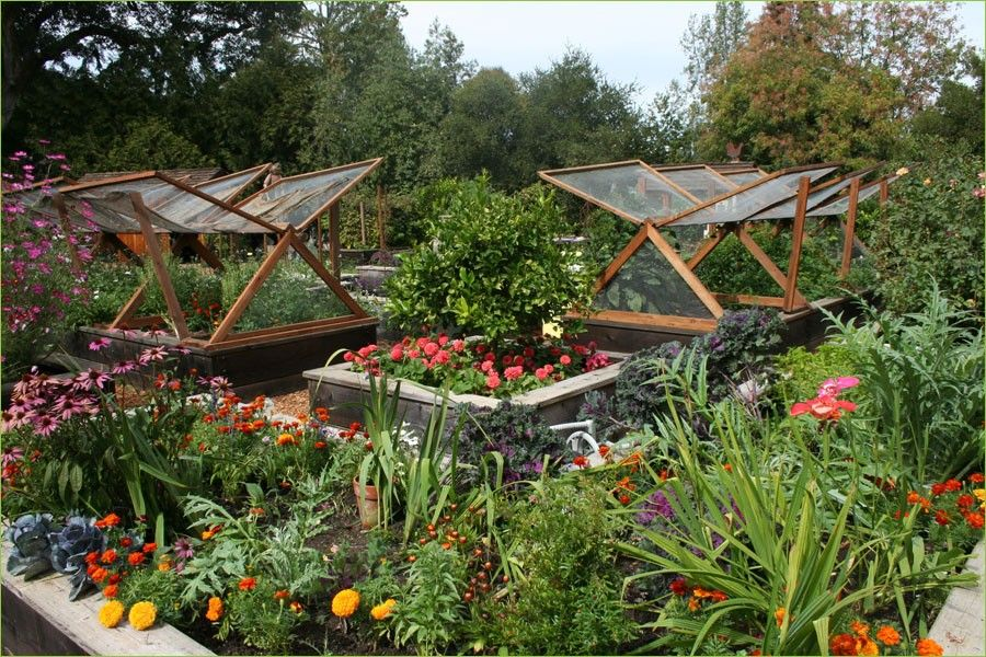 Home Food Gardens Vegetable Garden Designs Australia A Margarite Gardening Ideas Garden Design Layout Garden Layout Garden Layout Vegetable