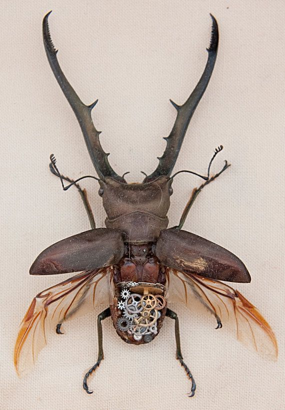 Longjawed steampunk stag beetle by AlteredInsects on Etsy, $110.00