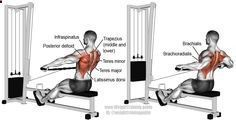 Wide grip cable row A compound pull exercise There is no specific target muscl
