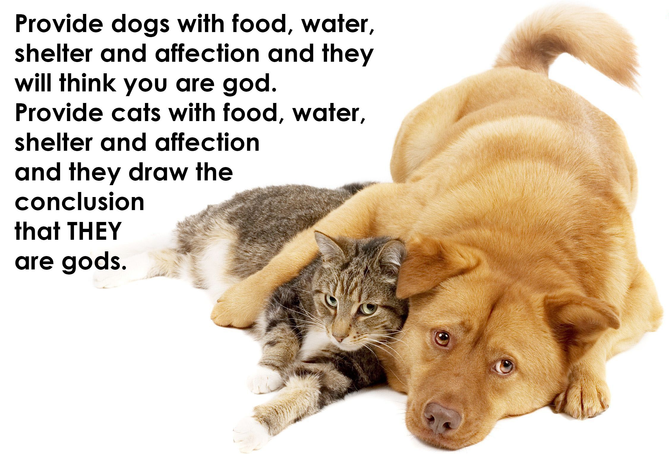 We Love This Quote Dogquote Catquote Cute Cats And Dogs Cat Quotes Dog Quotes