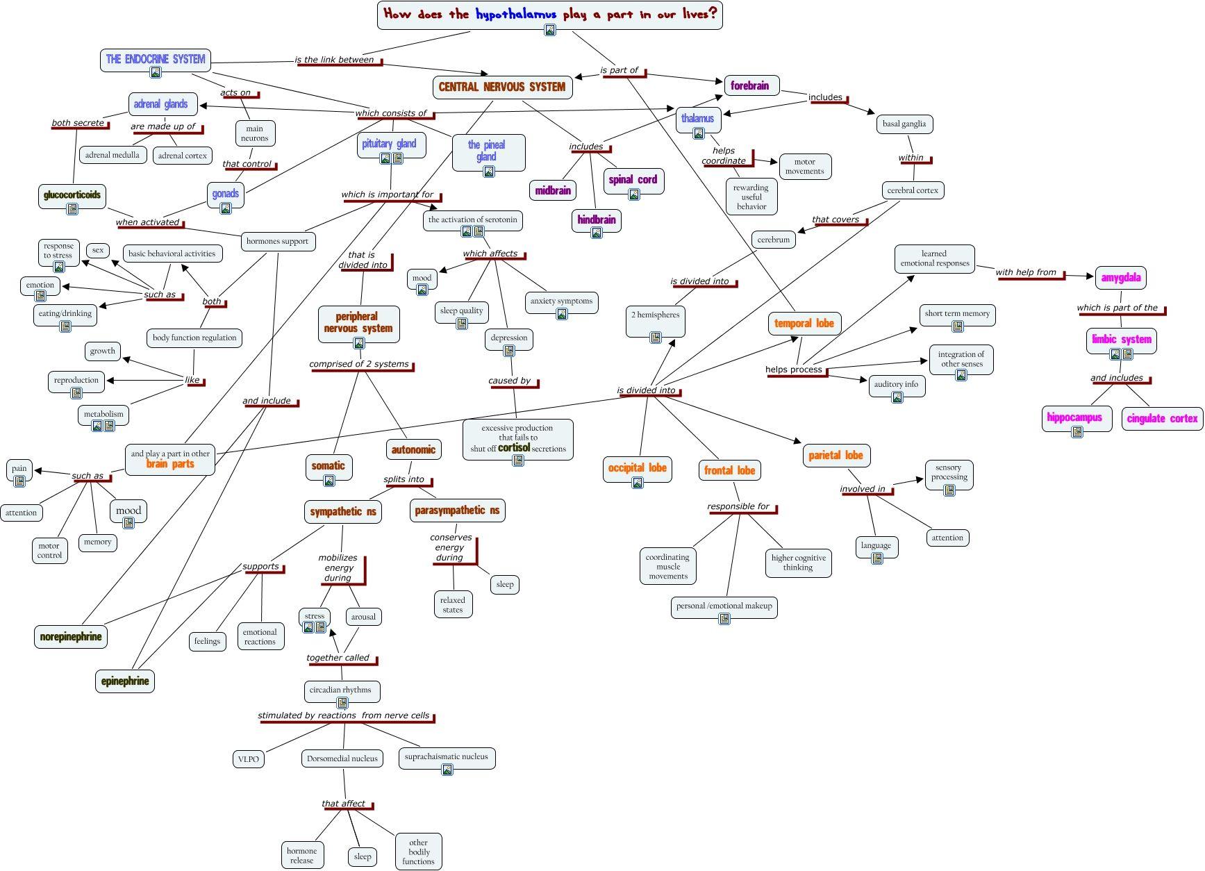 Neuroanatomy Basal Ganglia Concept Map