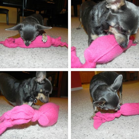 30+ Dog Toys You Can Make From Things Around the House  f8b4d6bb35
