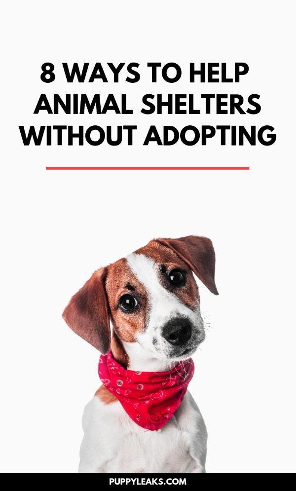 8 Ways You Can Help Shelter Animals Without Adopting Animal Shelter Animal Shelter Donations Shelter