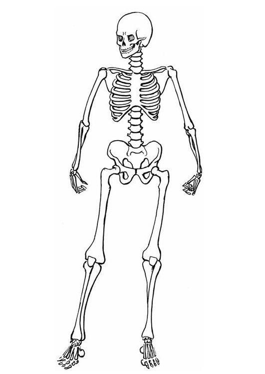 ausmalbilder skelett körper skelett malvorlagen