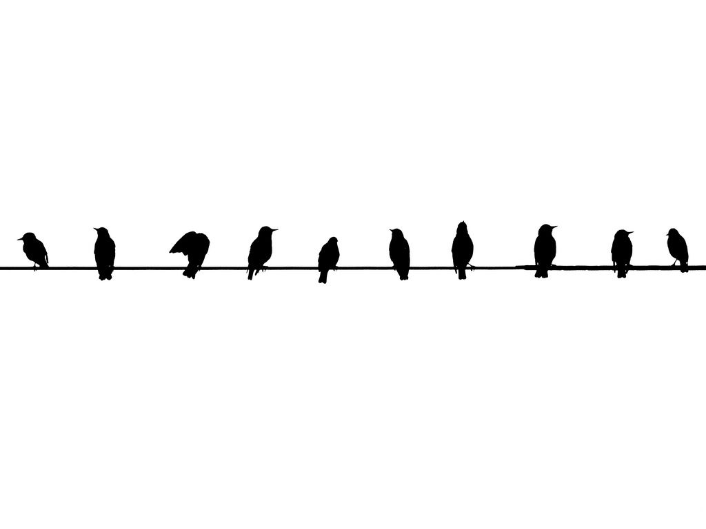 tumblr backgrounds black and white birds – Wallpaper ...