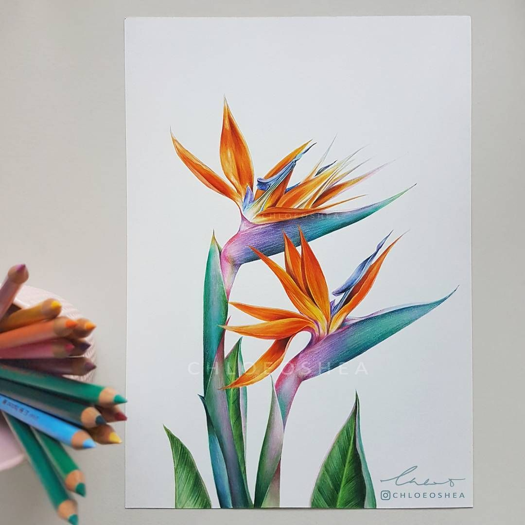 My Version Of A Bird Of Paradise Flower To Add To My Tropical Theme It Always Makes Me So Happy When I S Flower Drawing Flower Art Birds Of Paradise Flower
