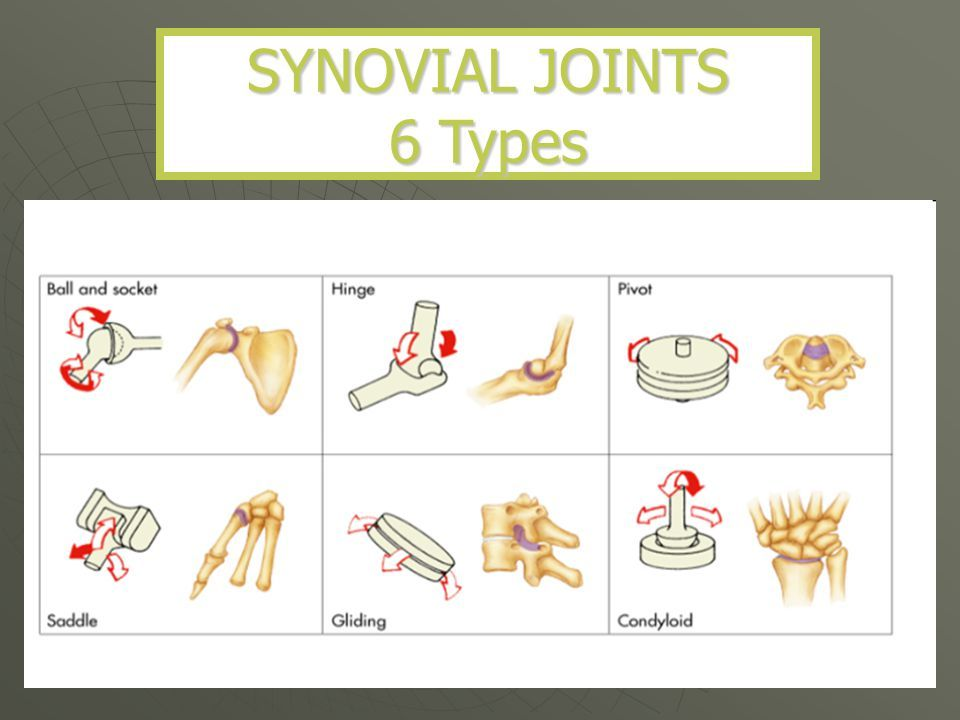 Types of joints anatomy