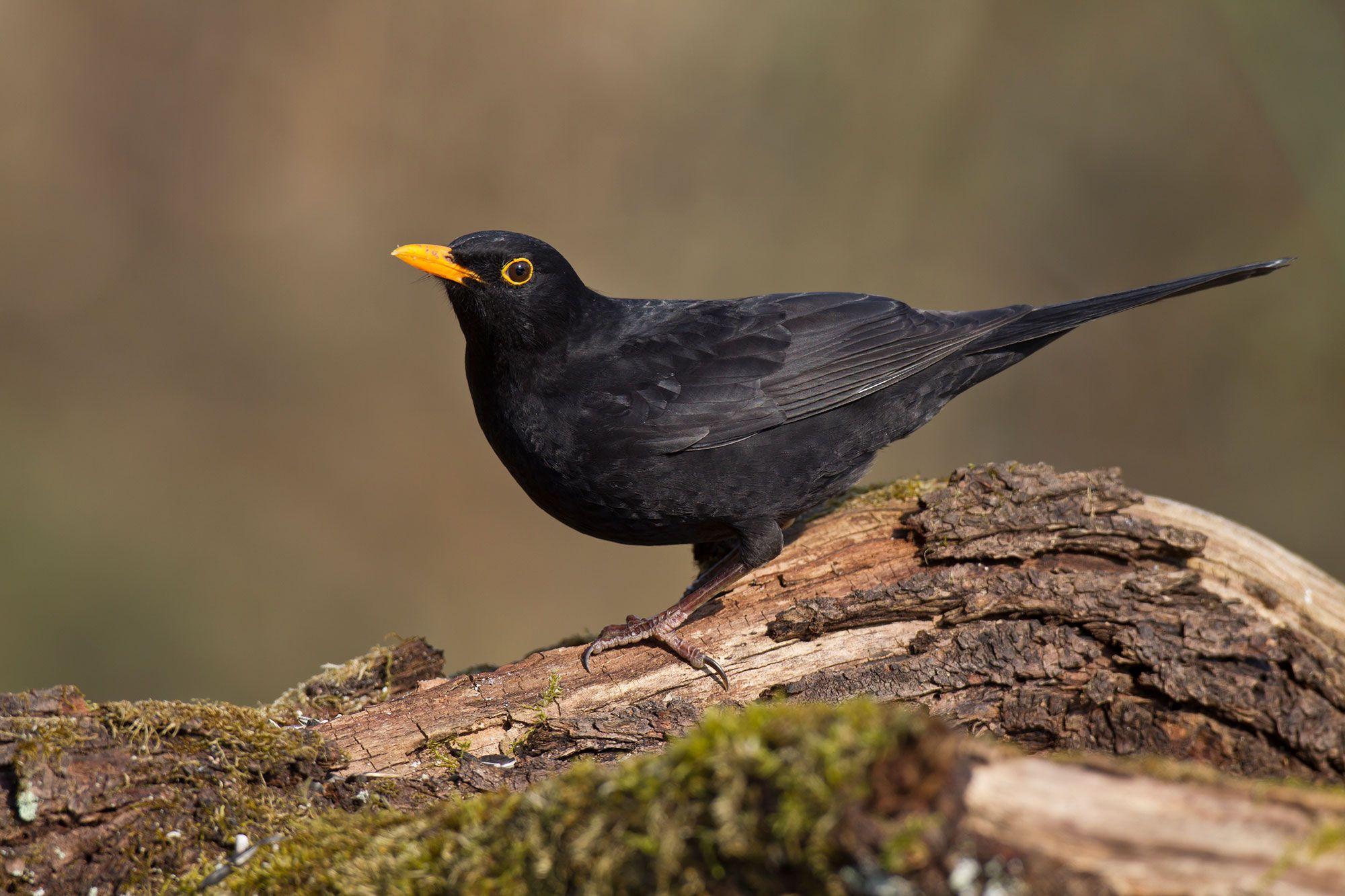 Welche Vogel Sieht Man Im Winter In Bayern Hier Finden Sie Die 25