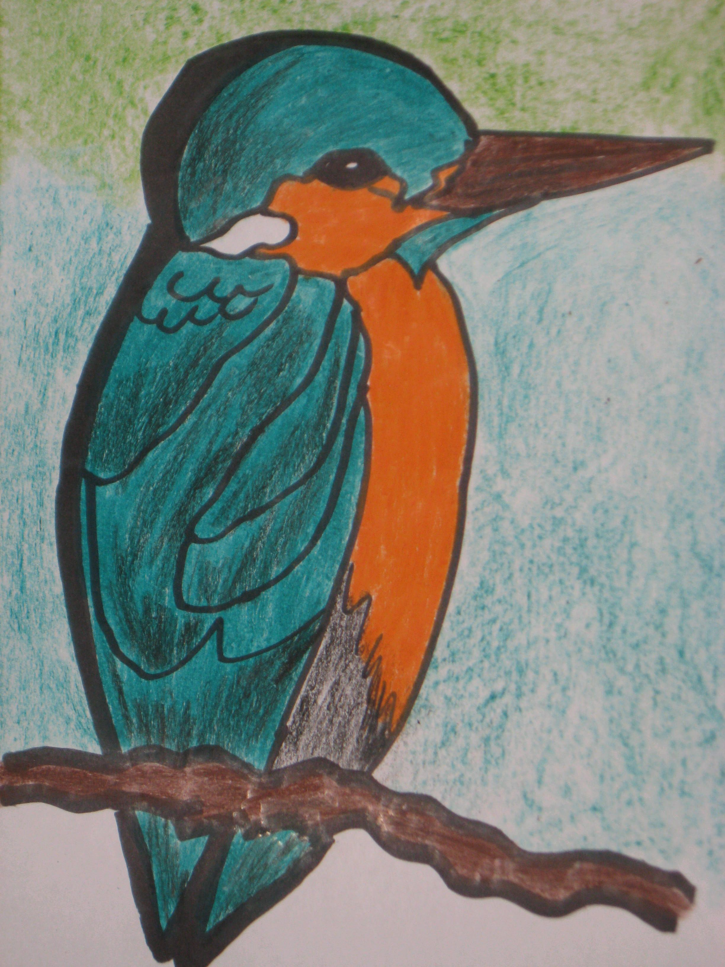 Kingfisher drawing with pencil colours crayons my artwork