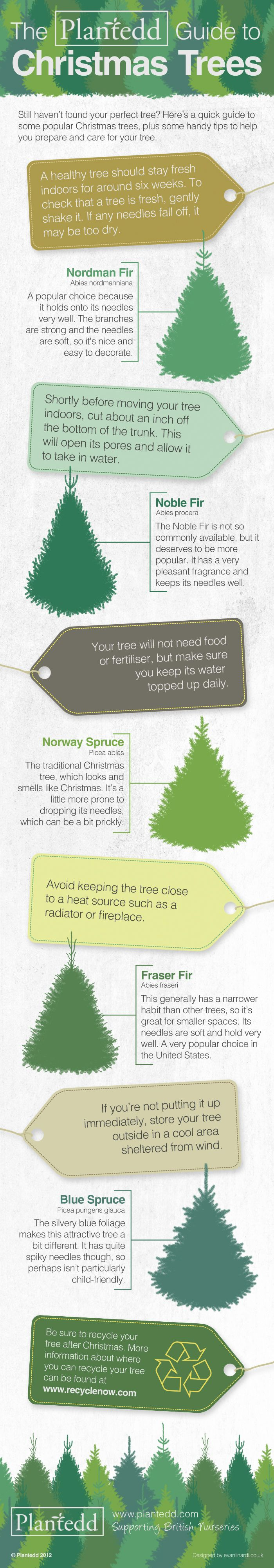 which christmas trees hold on to their needles the best and which one smells of christmas to find out which variety is the perfect tree for you and g - Best Smelling Christmas Tree