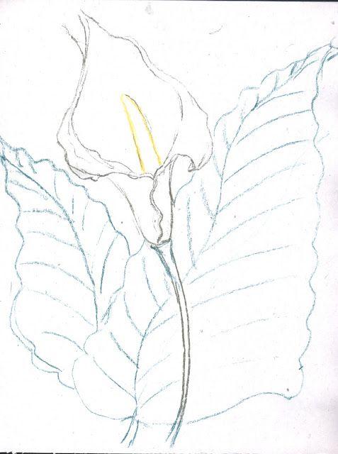 Dibujos Flores Alcatraz Imagui Cortinas Vainicas