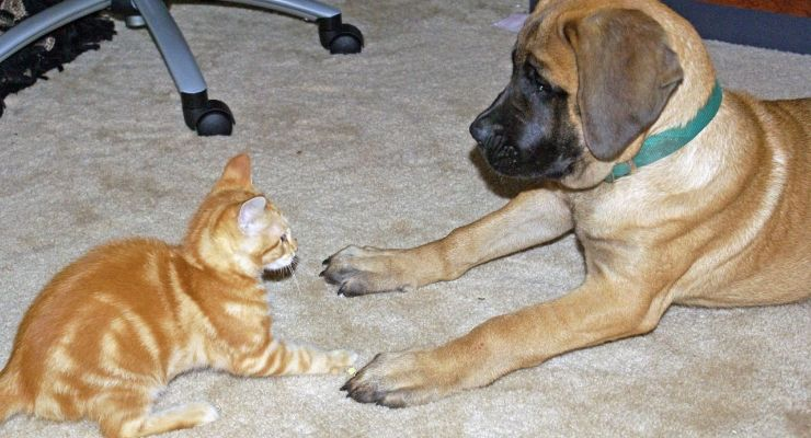 So, You Want to a Pet Foster Parent? Pets, Pet