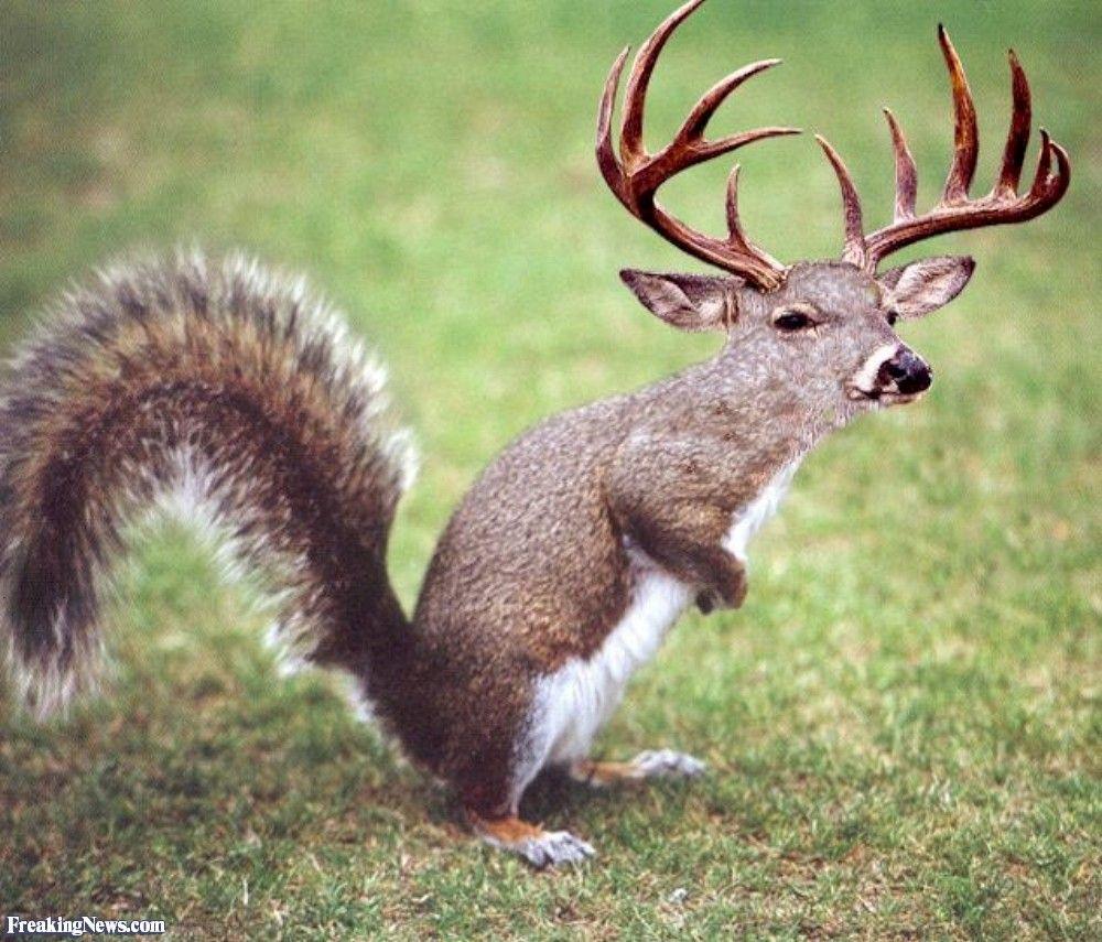 deer monster - Recherche Google