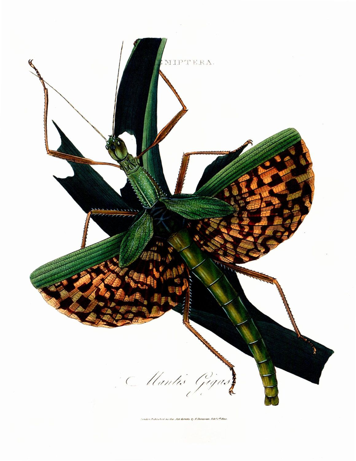 An Epitome Of The Natural History Of The Insects Of India