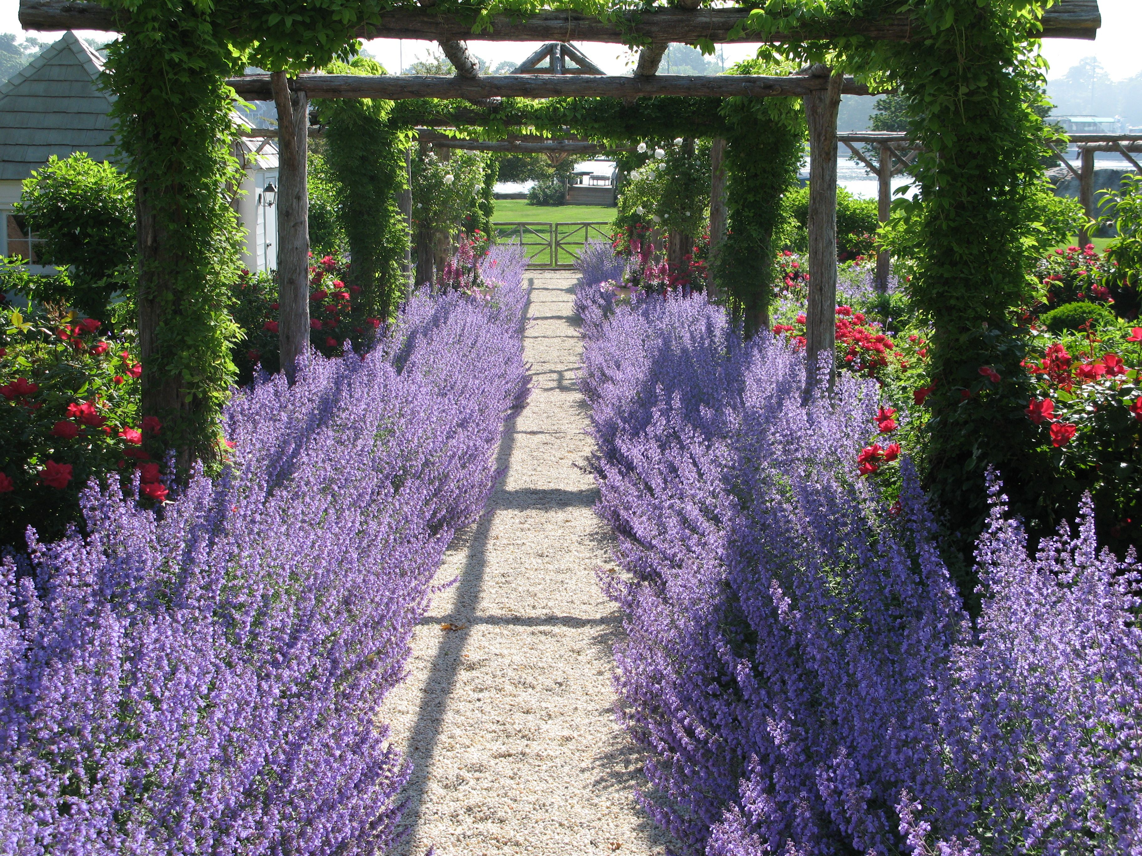 This is the entrance to my home, with beautiful lavender flowers ...