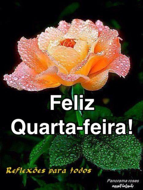 Feliz Quarta Feira Bom Dia Rosas