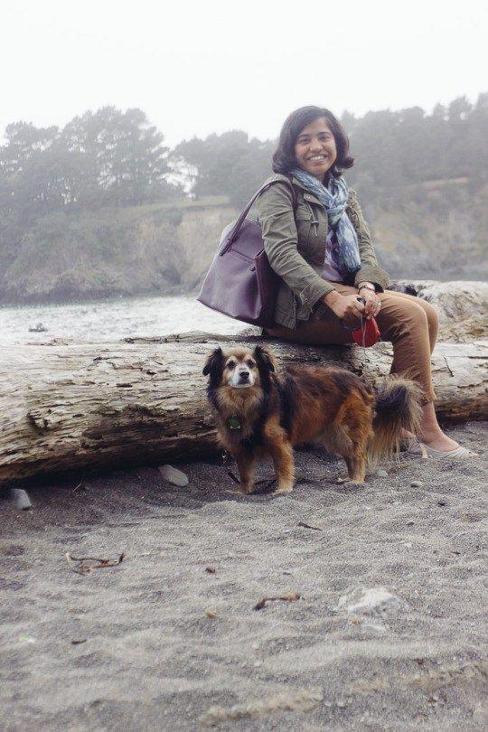 Dog Friendly Mendocino 6 Pet Activities In California