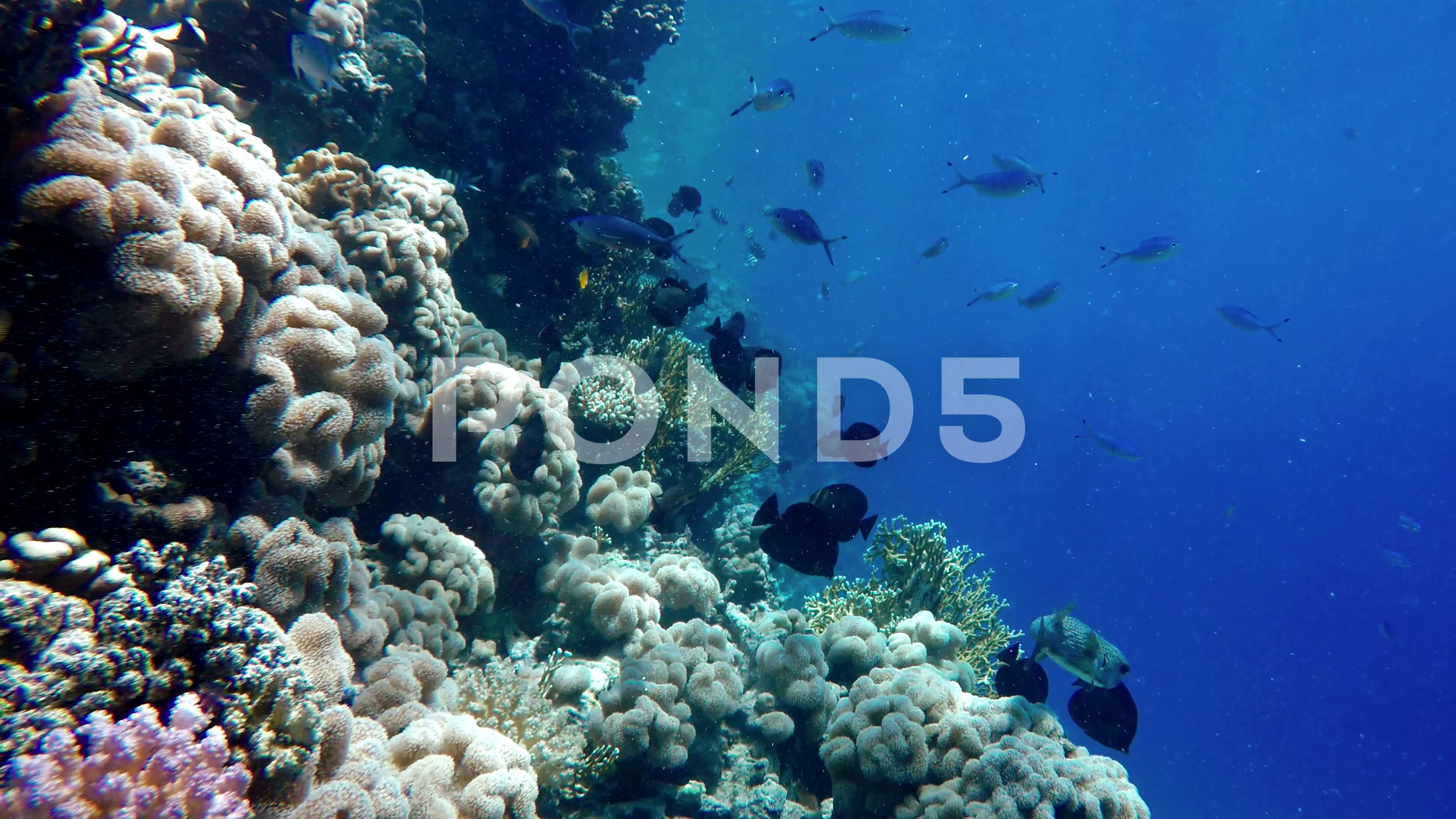 Coral reef and beautiful fish Underwater life in the ocean Stock