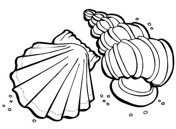Sea Animals Coloring Pages Sea Animals Two Sea Shells Sea